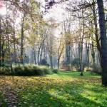 Lindenpark in autumn