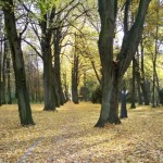 path with scattered leaves