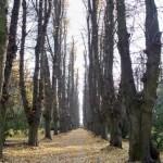 avenue through the park