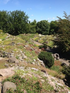 … or get active and climb up the Alpinum (alpine garden) with alpine plants