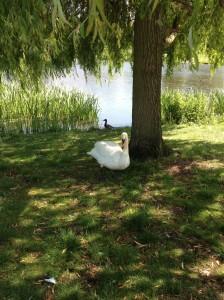 The pond's namesake