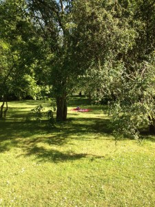 Bring a blanket, and relax between the trees…