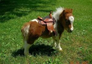 Very little pony