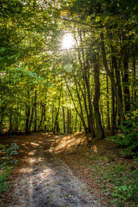 Heilsam: Heringsdorfer Wald auf Usedom (Foto: Usedomer Tourismus GmbH/Andreas Dumke)
